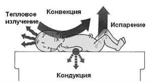 Терморегуляция ребенка