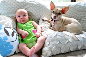 Многоразовые подгузники стали элементом одежды малышей
